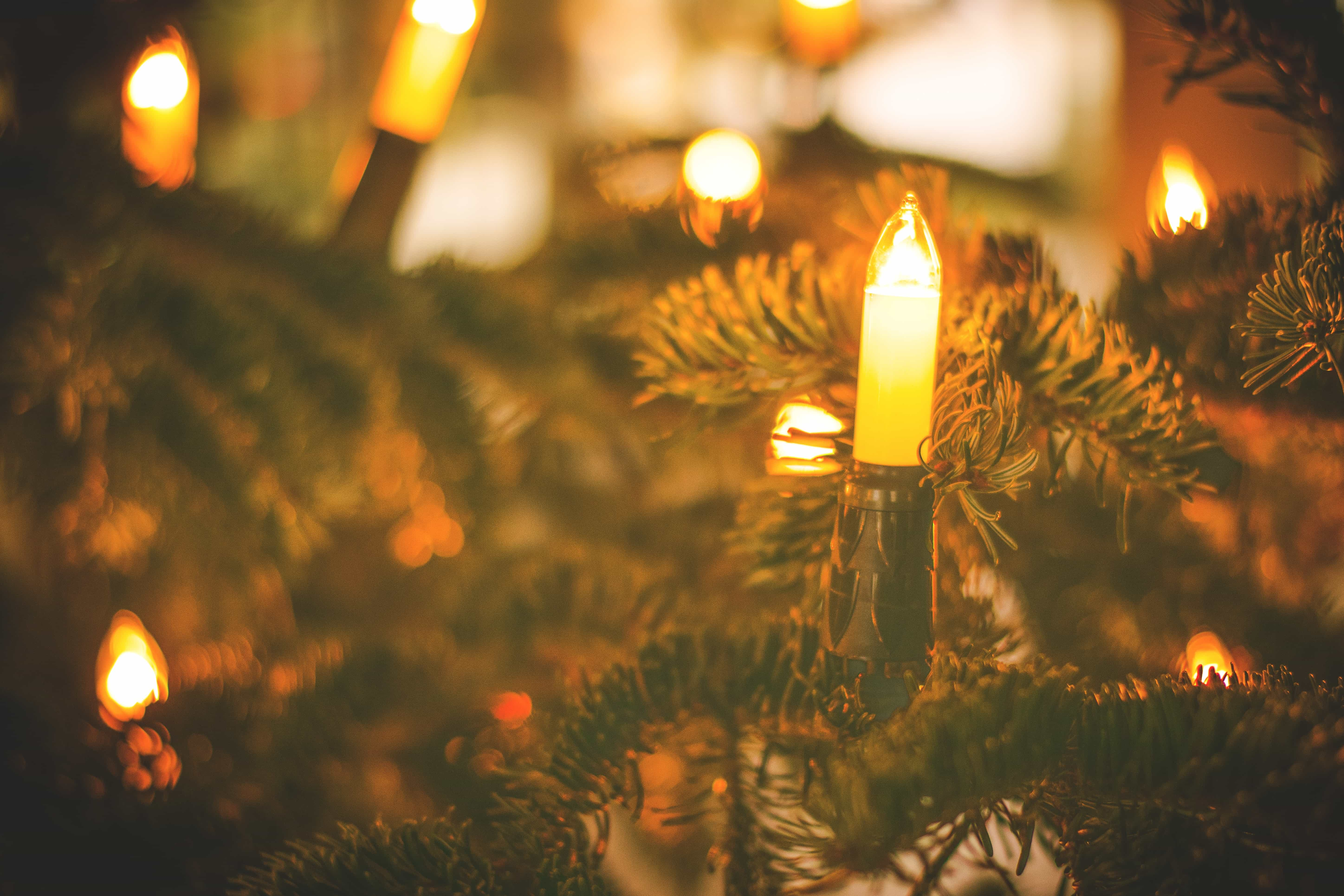 How to Properly Recycle Your Old Christmas Tree Lights | GreenCitizen