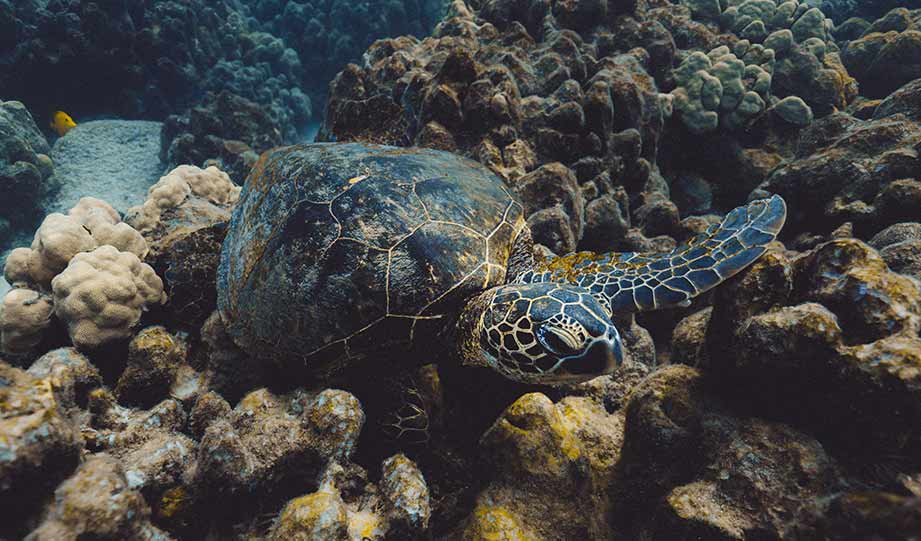 Featured image for Has Lebanon Become An Unexpected Sea Turtle Sanctuary article
