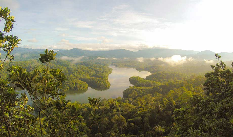 Featured image for How New UK Laws Could Protect Rainforests article