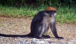 Featured image for New Refuge for Rare Trees and Primates in Tanzania article