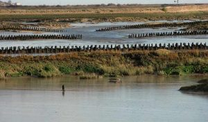 Featured image for Artificial Salt Marshes Essential for Coastal Flood Defenses article