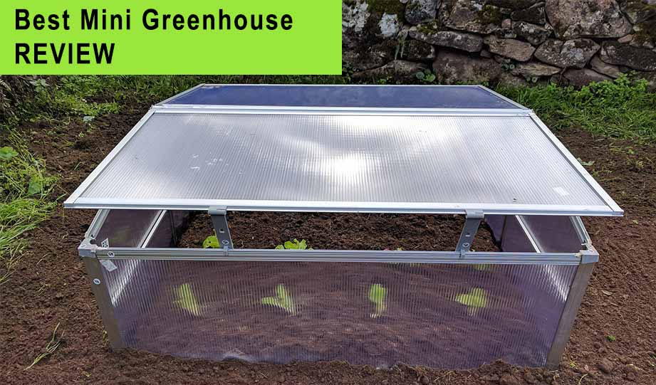 Featured image for best mini greenhouse article