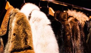 Featured image for Israel To Ban Fur Trade article