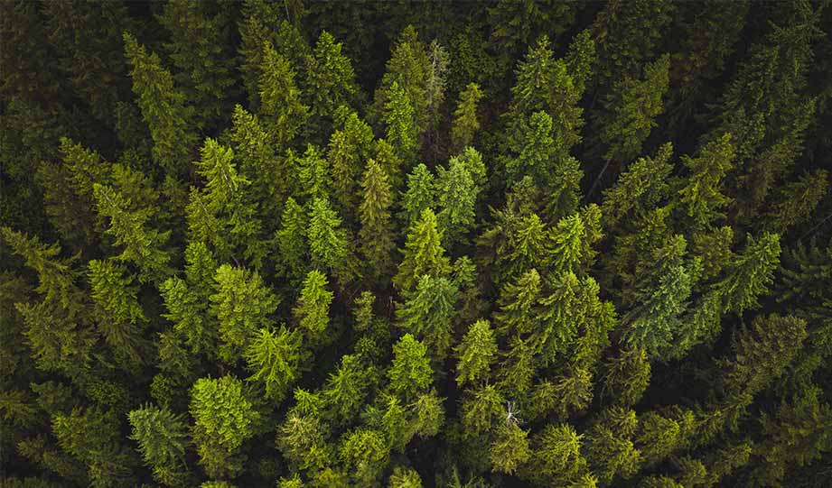 Featured image for Reforestation Projects Are Gaining Momentum In The US article