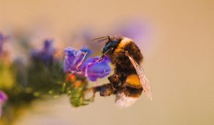 Featured image for Relief For Honeybees As Population Increases For First Time In Years article