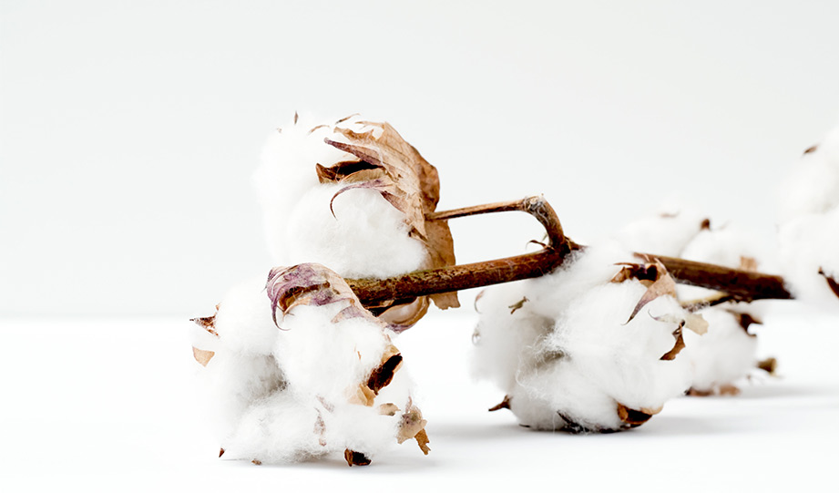 Featured image for The Growing Demand For Circular Cotton Supply article