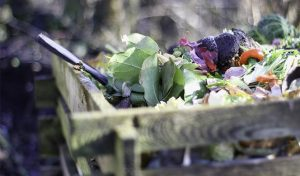 Featured image for Urban Composting At A Huge Scale article