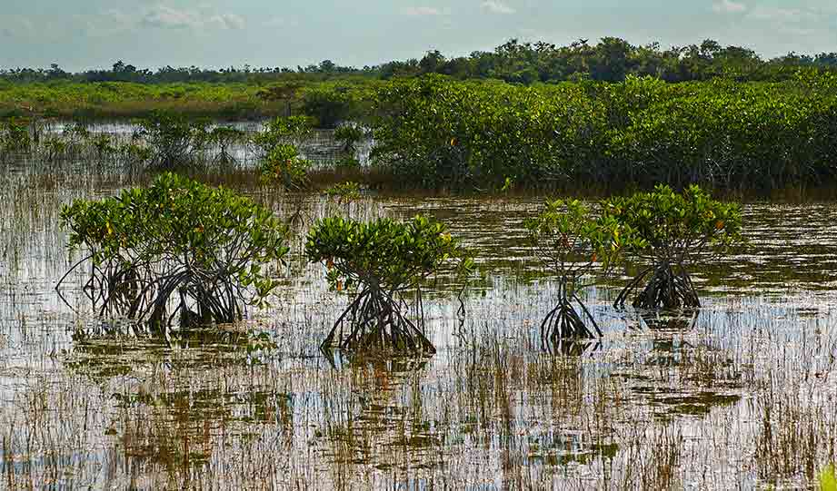 Featured image for Virtual Panel Participants Praise Progress in Everglades Restoration article