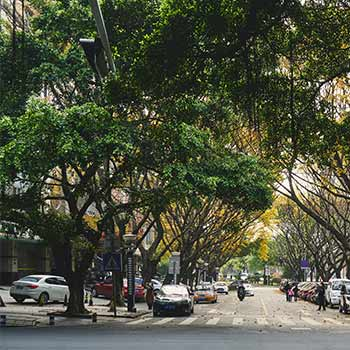 trees filling a city