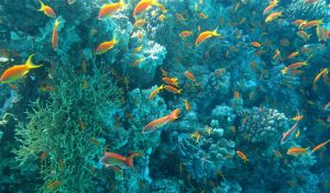 Featured image for Alexandra Cousteau Aims To Restore Ocean Biodiversity By 2050 article