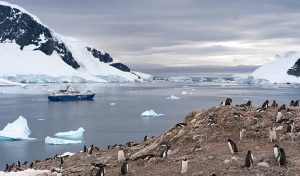 Featured image for New Antarctic Conservation Action Underway article