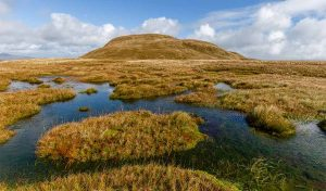 Featured image for Tackling Peat Bog In Scotland To Help Reduce Emissions article