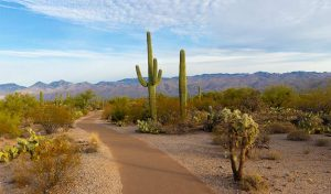 Featured image for Utility Regulators Vote For Carbon-Free Arizona By 2050 article