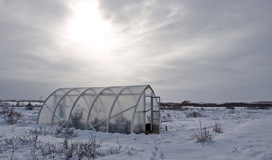 Featured image for winter greenhouse article