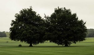 Featured image for Brits Planting Trees to Mark 70 Years Of Queen Elizabeth's Reign article
