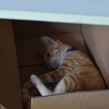 A box with a cat playing inside