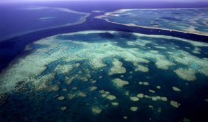 Featured image for Discovering Skyscraper Coral Reefs article