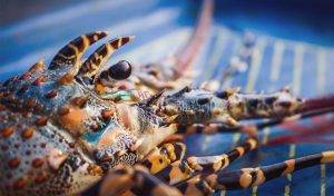 Featured image for Maine's Example Of Sustainable Lobster Fishing article