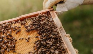 Featured image for Saving Bees With Scientific Habitat Maps article