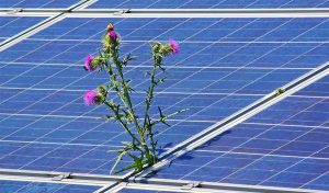 Featured image for Solar Farms In Minnesota Now Grow Food Too article