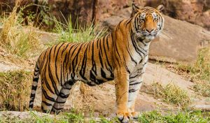 Featured image for The House Of Reps Passes Bill Featured In Tiger King To Regulate Big Cat Ownership article