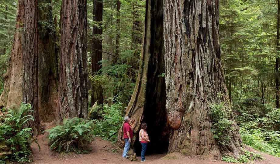 Featured image for 50 Years Living Off-Grid Amid Northern California Redwoods article