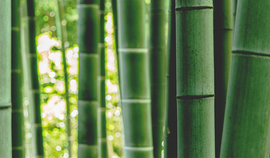 Featured image for Growing Bamboo Could Turn The Tide In America's Fight On Carbon article-1
