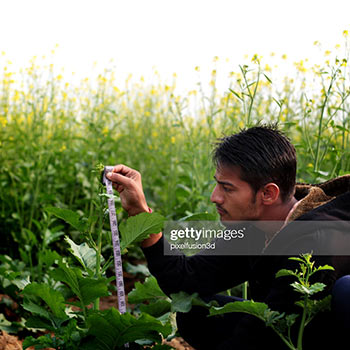 A plant being measured by a man using a ruler