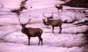 Featured image for New Mexico Purchase Land To Help Protect Wildlife article