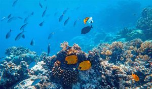 Featured image for Rare Indian Ocean Cool Spot Boosts Biodiversity article