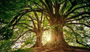 Featured image for Trees Become The Practical Solution To Climate Change article