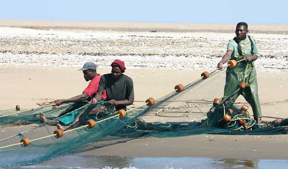 Featured image for Namibian Fishermen Take Initiative To Protect Birds article