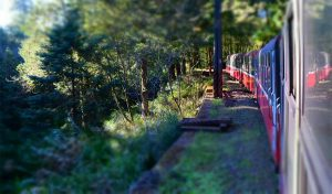 Featured image for MAD Premieres Solar-Powered 'Train Station in the Forest' article