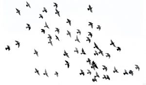 Featured image for The Secret To Happiness Could Come Down To Paying More Attention To Birds article