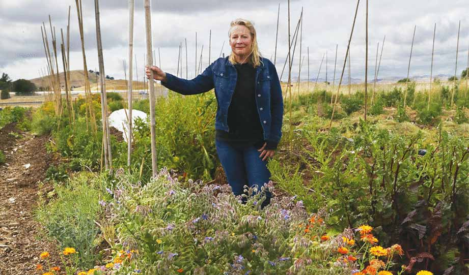 Featured image for California Farmer Develops Urban Farmland From Reclaimed Land and Water article