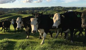 Featured image for Regenerative Agriculture Gets a Boost From Danone North America article