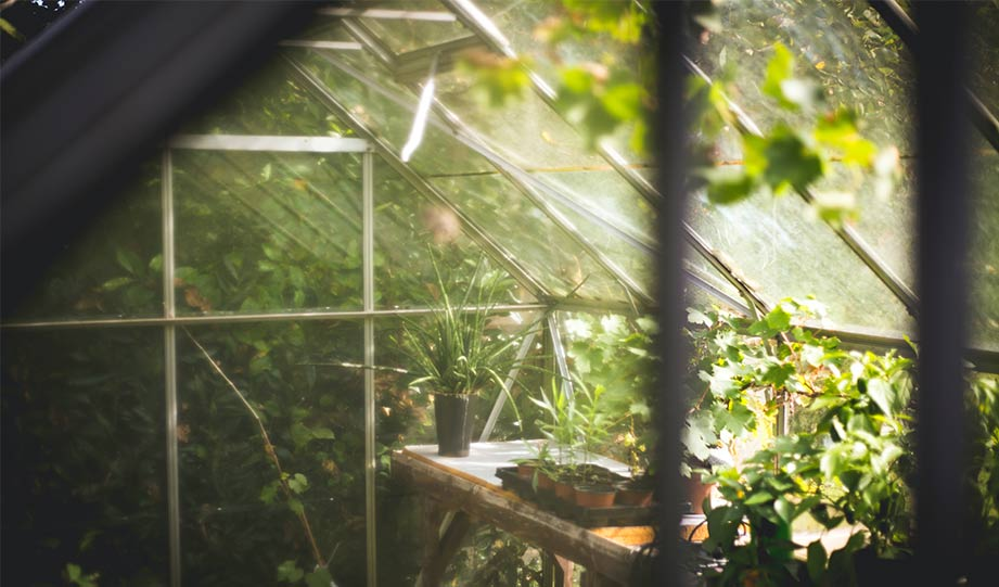 Featured image for Semi-Transparent Solar Panels Can Power Greenhouses Without Obstructing Sunlight article