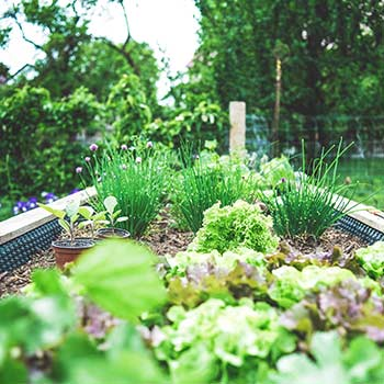 A small garden with vegetables planted in it