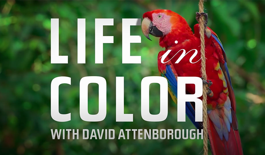 Featured image for New Netflix Series Shines Light on the Role of Color in Nature article