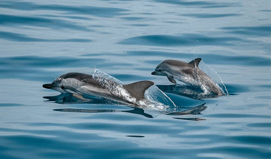 Featured image for New Yorkers Delighted By Dolphins in East River article