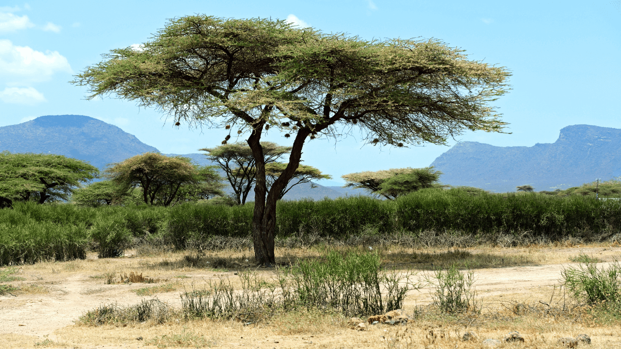 """The """"Olympic Forest"""" Project is Building Africa's Great Green Wall"""