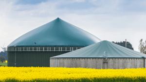 Biogas From Hog Waste