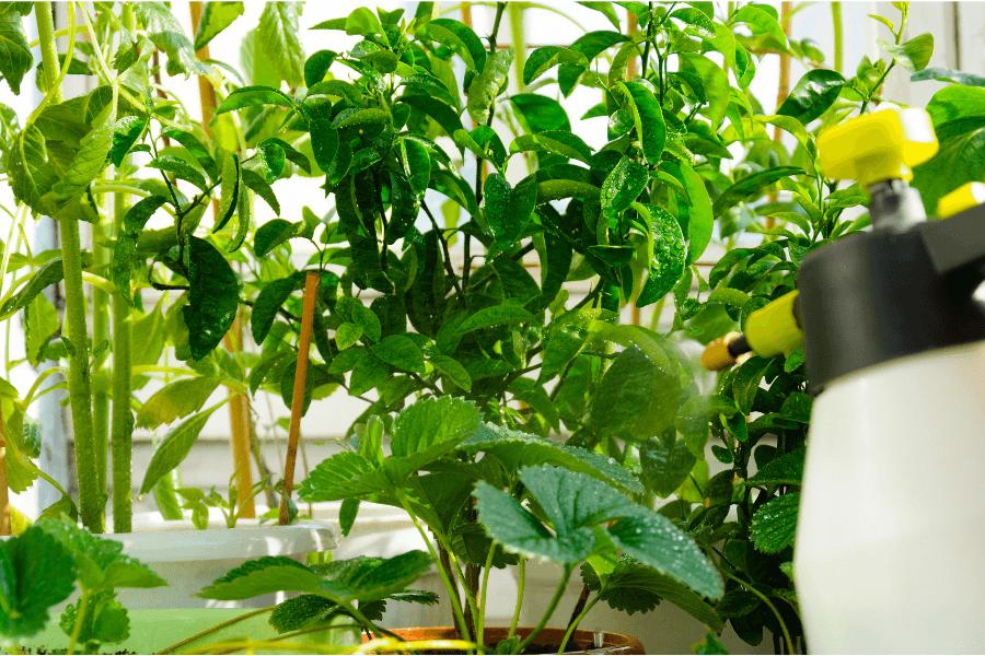 Pepper spray Natural Pesticides