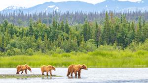Positive News For Alaskan Wildlife