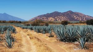 Mexico's New Strategy to Reverse Semi-arid Land Degradation
